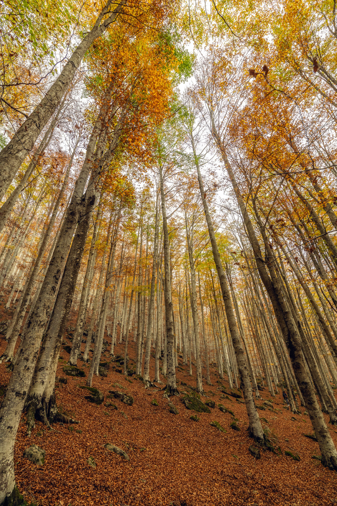Bäume beim Castel del Piano